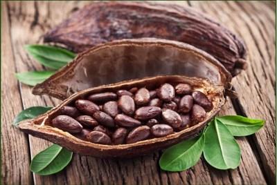 Theobromine Cacao