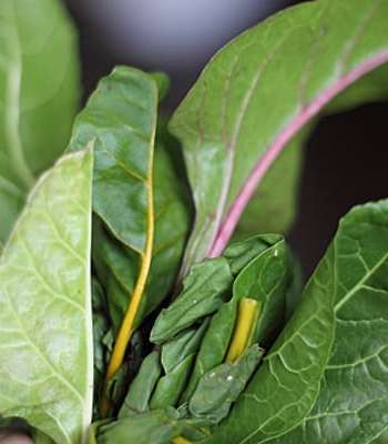 Limp Chard Leaves