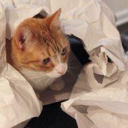 Miso in Tissue Paper