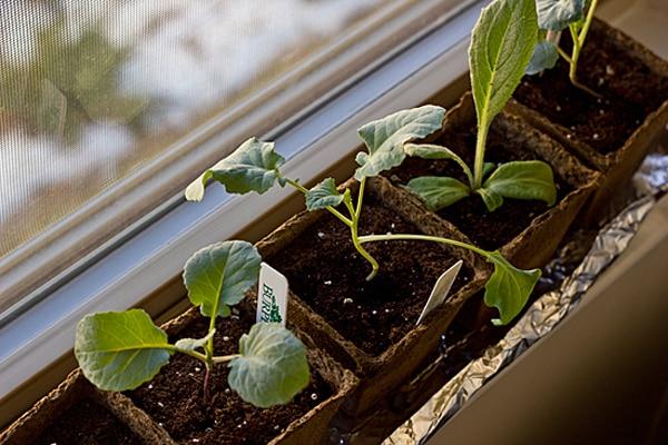 Plants on Windowsill