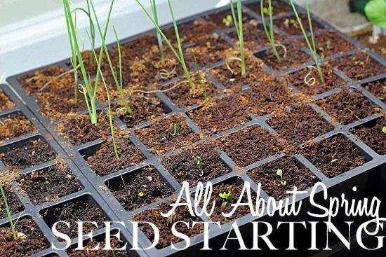 Spring Seed Starting