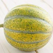 Petit Gris de Rennes Melon [August 2012]