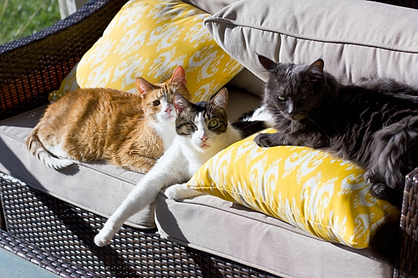 Cats on Couch