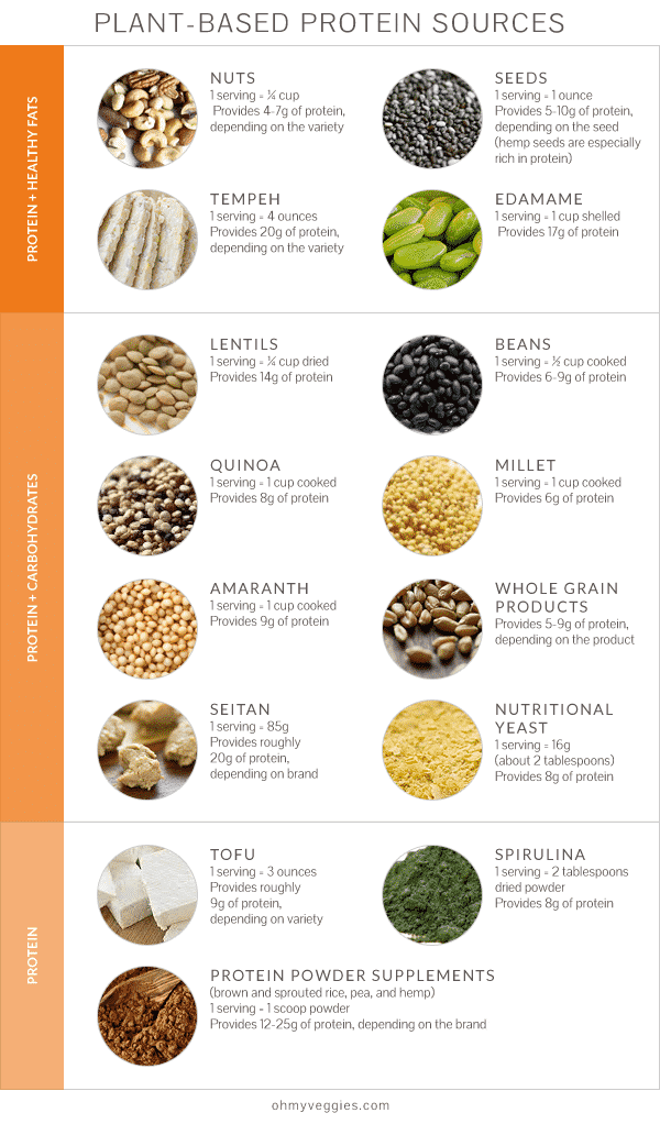 Plant Protein Sources