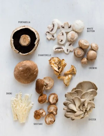 Common Types of Fresh Mushrooms