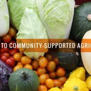 A Guide to CSAs