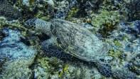 Schildkröten werden hier besonders geschützt
