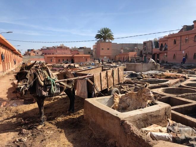 Quartier des Tanneurs in Marrakesch