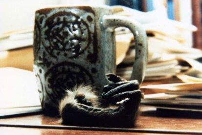 Fotografia da mesa de Taub, incluindo uma mão decepada de um macaco, usada como um peso de papel.