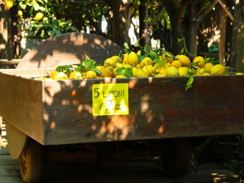 Italy Sorrento Lemon Grove9 500x375