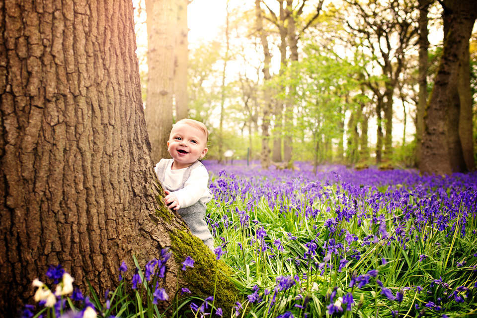 bluebell photography