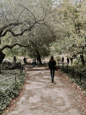 central park path in new york city