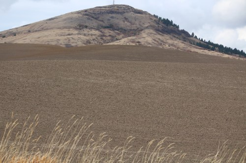 Steptoe Butte stands tall among the Palouse hills.