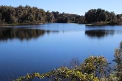 Peaceful scene -- Alachua Sink