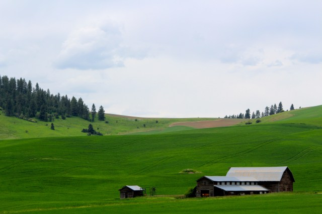 Pastoral setting on the Palouse