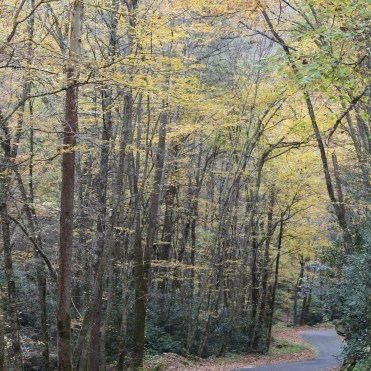 One-lane road at Rocky Fork State Park, Tennessee