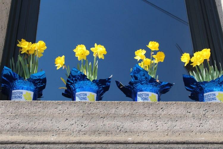 Row of daffodils in a Boston church window