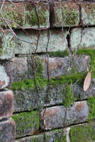 Moss finds a foothold on a cemetery brick wall on Daufuskie Island.