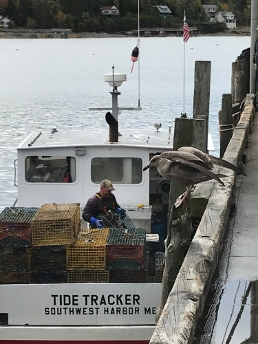 A lobsterman pulls up to unload at a dock in Southwest Harbor