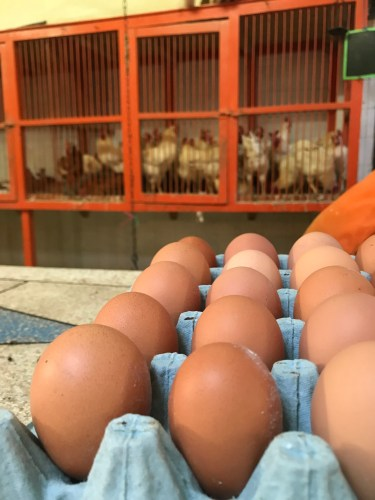 Fresh eggs and chickens: Marrakech medina