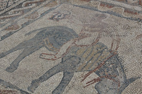 Floor with mosaic horse and rider: Volubilis