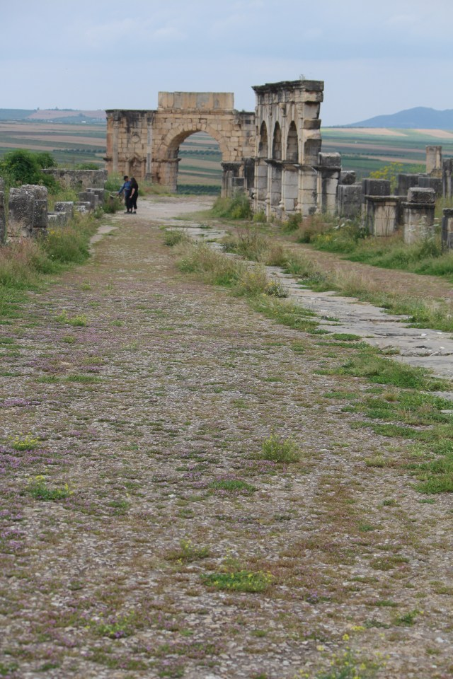 Looking back at Volubilis, but remembering the storks!