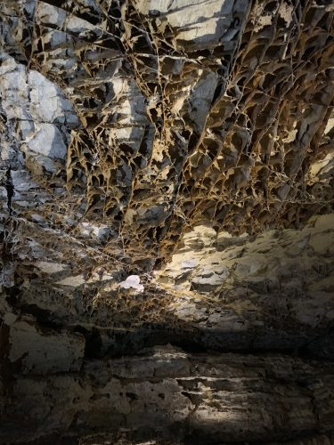 Wind Cave Natl Park - boxwork