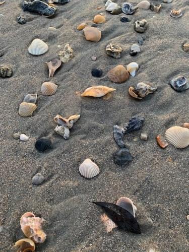 Shells on North End, Pawleys Island, SC