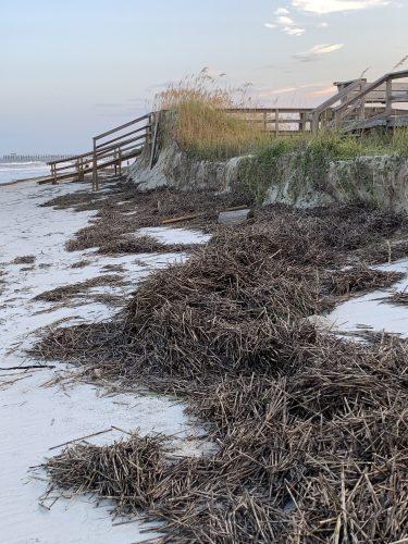 Debris washed ashore by Hurricane Isaias, Pawleys Island