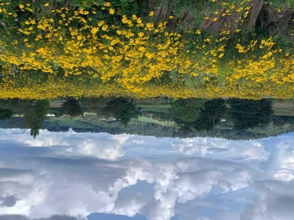 Wildflowers at Pebble Hall, Virginia