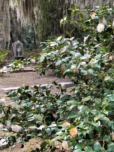 Bonaventure Cemetery -- grave with camellias