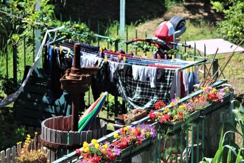 Colorful garden in Cinque Terre, Italy