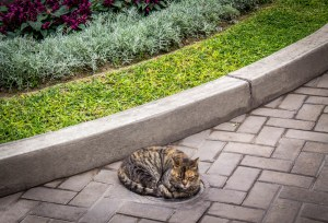 stray cats of Lima
