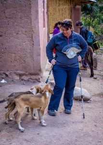 Stray dogs of the Machu Picchu Trail