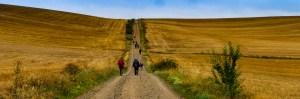 Hike Camino walking poles