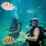 PADI open water dive test