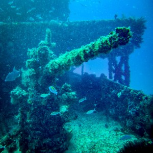 Gun from Wreck dive with Aquanauts