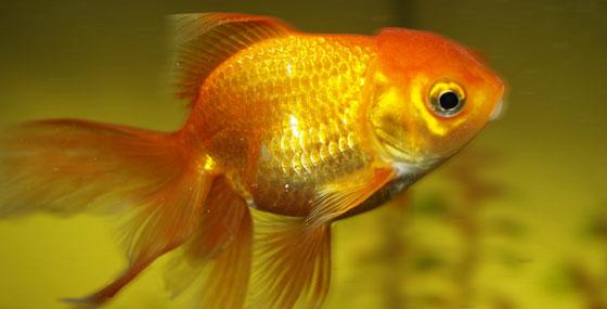 Very fishy!