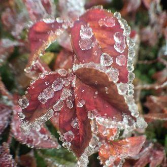 Ice Pellets