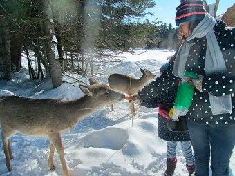 Dá pra andar no meio dos deers!
