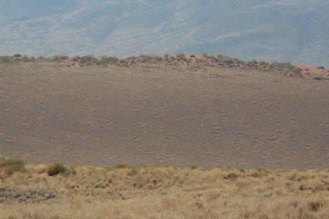 Fairy Circles, Namibia