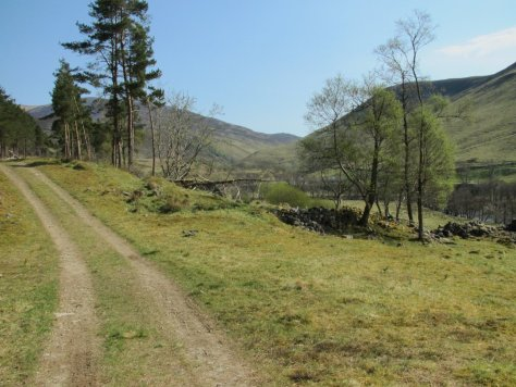 Track through Sean-bhaile woodland, Glen Tilt