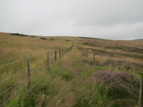 Twin fences on Finlarg Hill