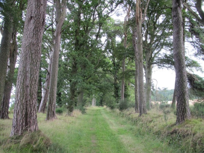Approach to Fothringham Hill from south