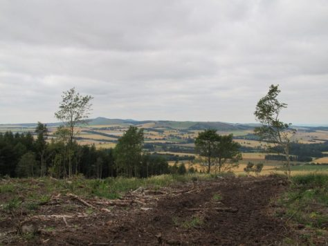 View of Sidlaws from summit of Fothringham Hill