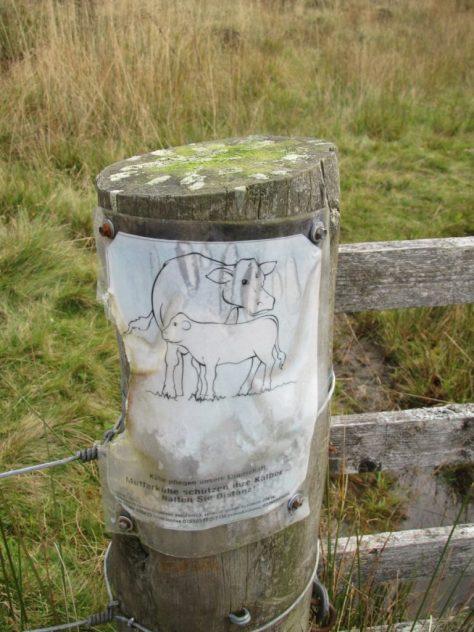 German cow warning