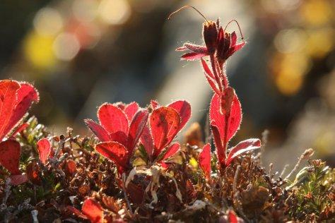Autumn, Itygran Island