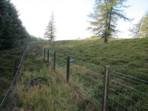 Double fence on forestry, Henderston Hill