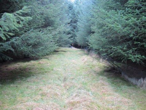 Forest track to Redmyre Loch