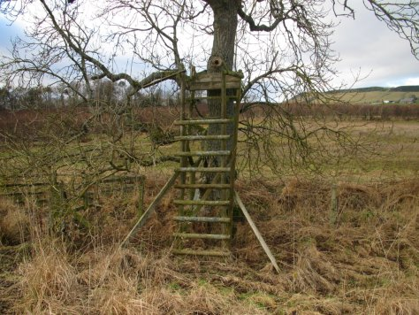 Chair in a tree, Bogle Den